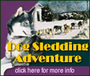 Dog Sledding Adventure